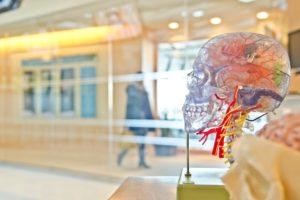 暗記が苦手な人は必見。脳科学と記憶と英語とプラスワン英語法